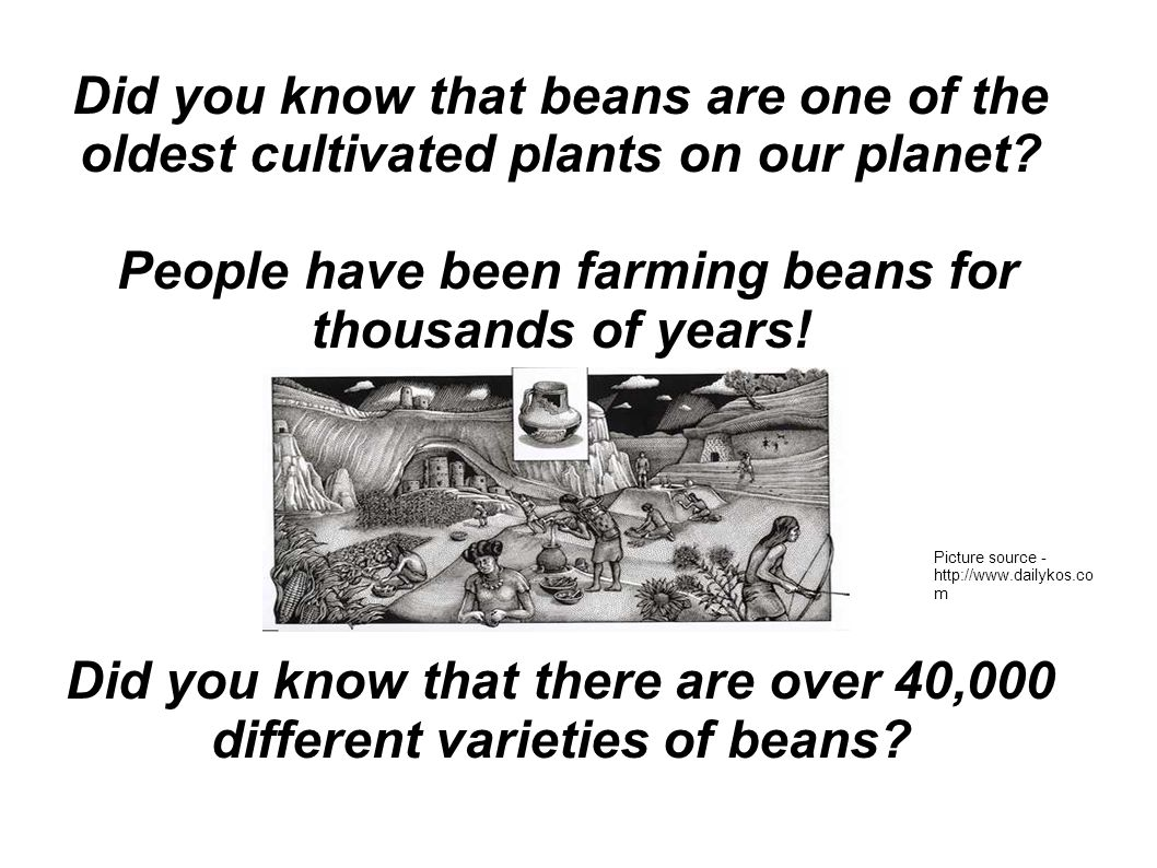 Did you know that beans are one of the oldest cultivated plants on our planet.