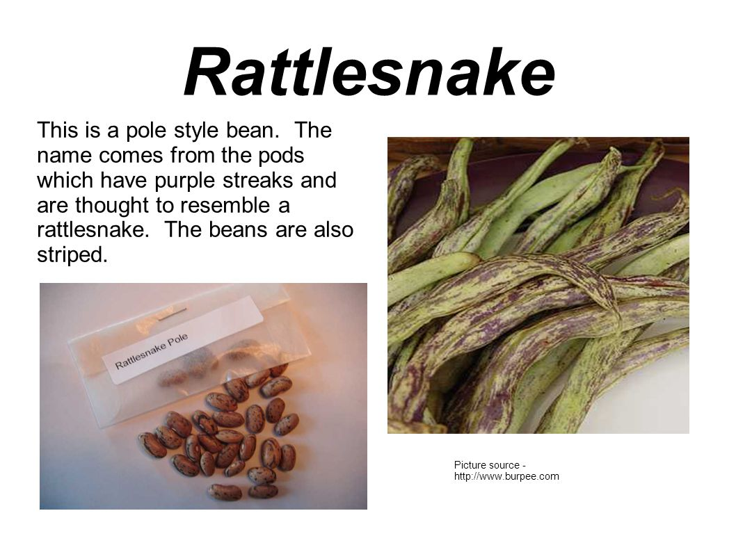 Rattlesnake This is a pole style bean.