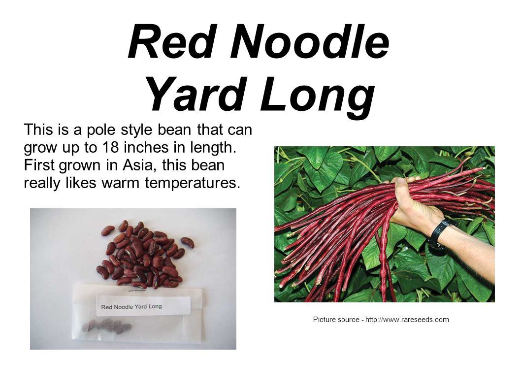 Red Noodle Yard Long This is a pole style bean that can grow up to 18 inches in length.