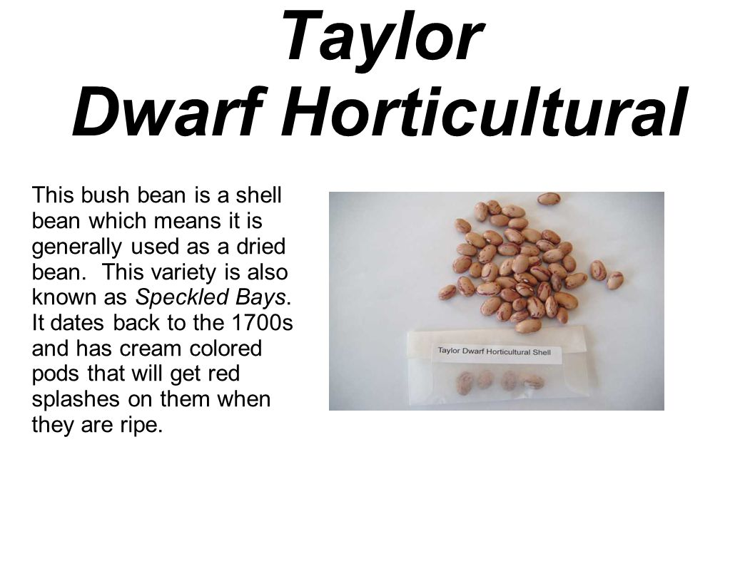 Taylor Dwarf Horticultural This bush bean is a shell bean which means it is generally used as a dried bean.