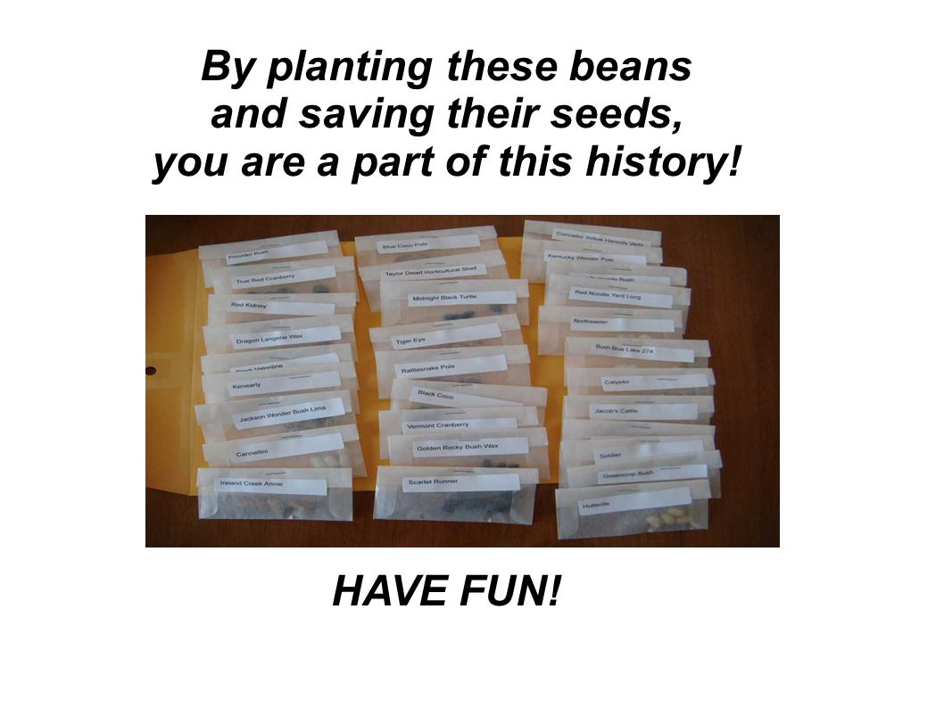 By planting these beans and saving their seeds, you are a part of this history! HAVE FUN!