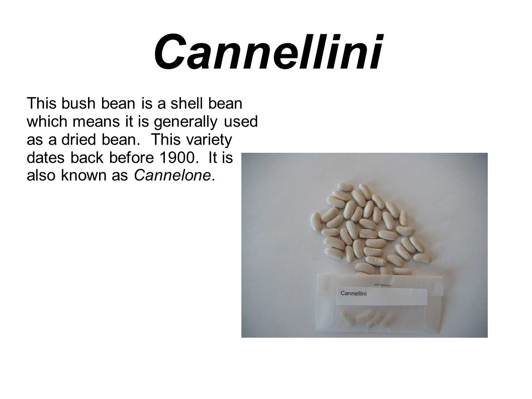 Cannellini This bush bean is a shell bean which means it is generally used as a dried bean.