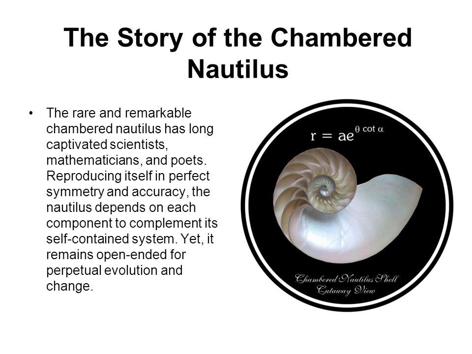 The Story of the Chambered Nautilus The rare and remarkable chambered nautilus has long captivated scientists, mathematicians, and poets. Reproducing