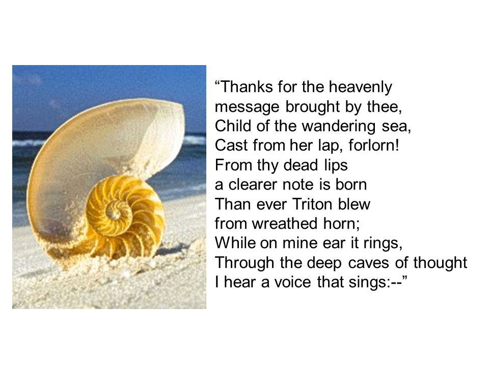 """""""Thanks for the heavenly message brought by thee, Child of the wandering sea, Cast from her lap, forlorn! From thy dead lips a clearer note is born Th"""