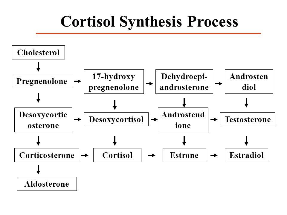 Cortisol Synthesis Process Cholesterol Pregnenolone Desoxycortic osterone Corticosterone Aldosterone 17-hydroxy pregnenolone Desoxycortisol Cortisol D