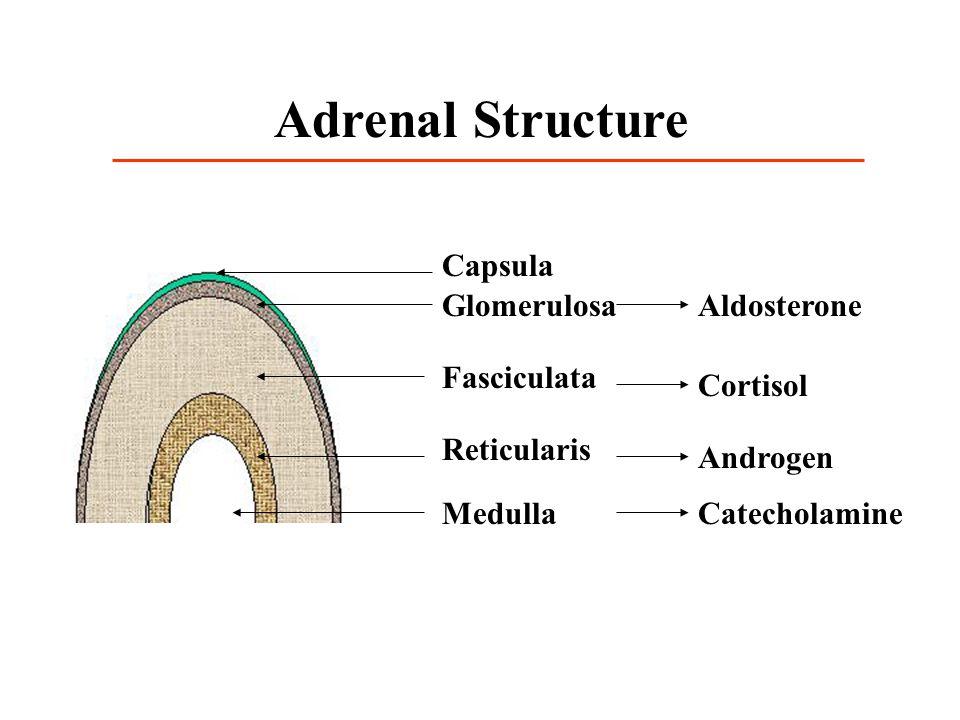 Capsula Glomerulosa Fasciculata Reticularis Medulla Aldosterone Androgen Catecholamine Adrenal Structure Cortisol