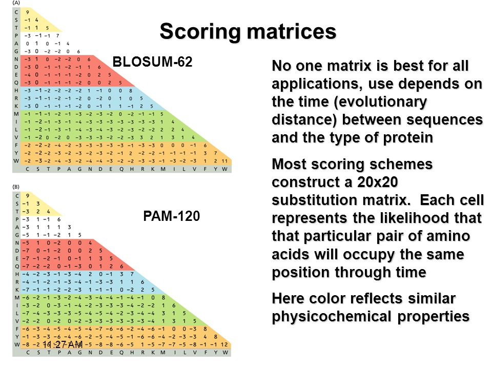 Scoring matrices No one matrix is best for all applications, use depends on the time (evolutionary distance) between sequences and the type of protein Most scoring schemes construct a 20x20 substitution matrix.