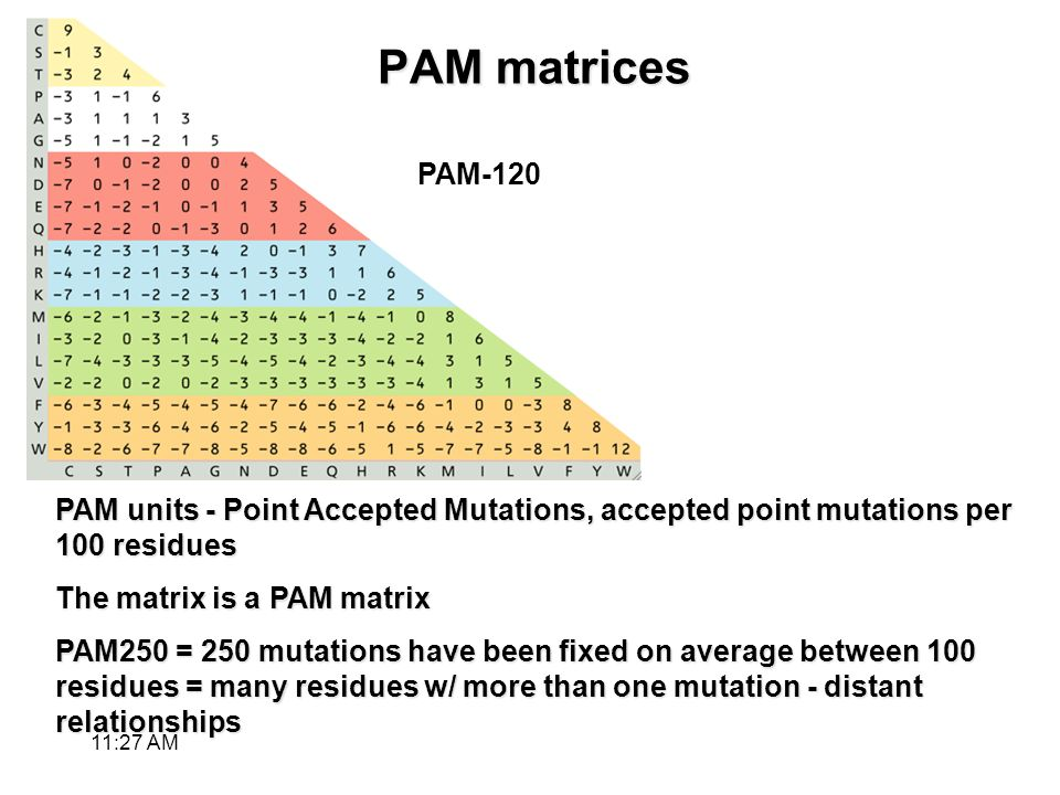 PAM matrices PAM units - Point Accepted Mutations, accepted point mutations per 100 residues The matrix is a PAM matrix PAM250 = 250 mutations have been fixed on average between 100 residues = many residues w/ more than one mutation - distant relationships PAM-120 11:28 AM
