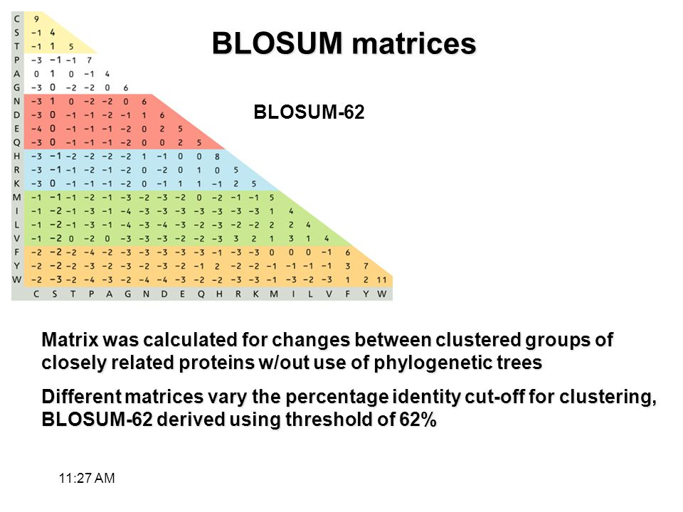 BLOSUM matrices Matrix was calculated for changes between clustered groups of closely related proteins w/out use of phylogenetic trees Different matrices vary the percentage identity cut-off for clustering, BLOSUM-62 derived using threshold of 62% BLOSUM-62 11:28 AM