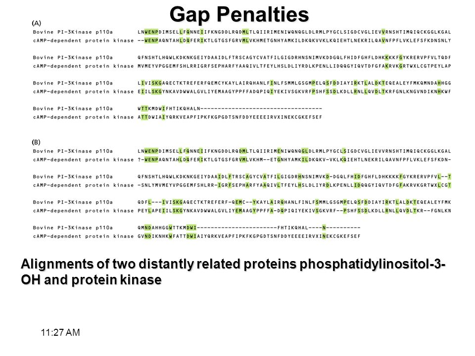 Gap Penalties Alignments of two distantly related proteins phosphatidylinositol-3- OH and protein kinase 11:28 AM