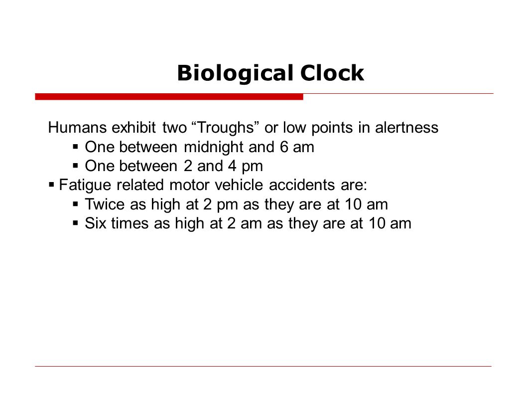 Biological Clock Humans exhibit two Troughs or low points in alertness  One between midnight and 6 am  One between 2 and 4 pm  Fatigue related motor vehicle accidents are:  Twice as high at 2 pm as they are at 10 am  Six times as high at 2 am as they are at 10 am
