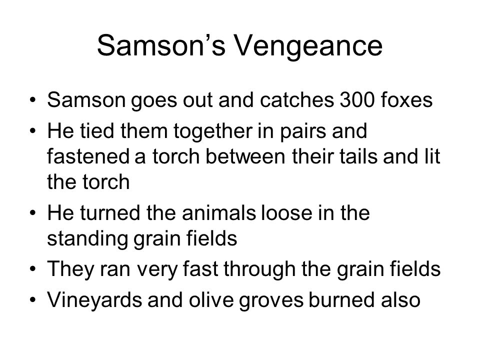 Samson's Vengeance Samson goes out and catches 300 foxes He tied them together in pairs and fastened a torch between their tails and lit the torch He turned the animals loose in the standing grain fields They ran very fast through the grain fields Vineyards and olive groves burned also