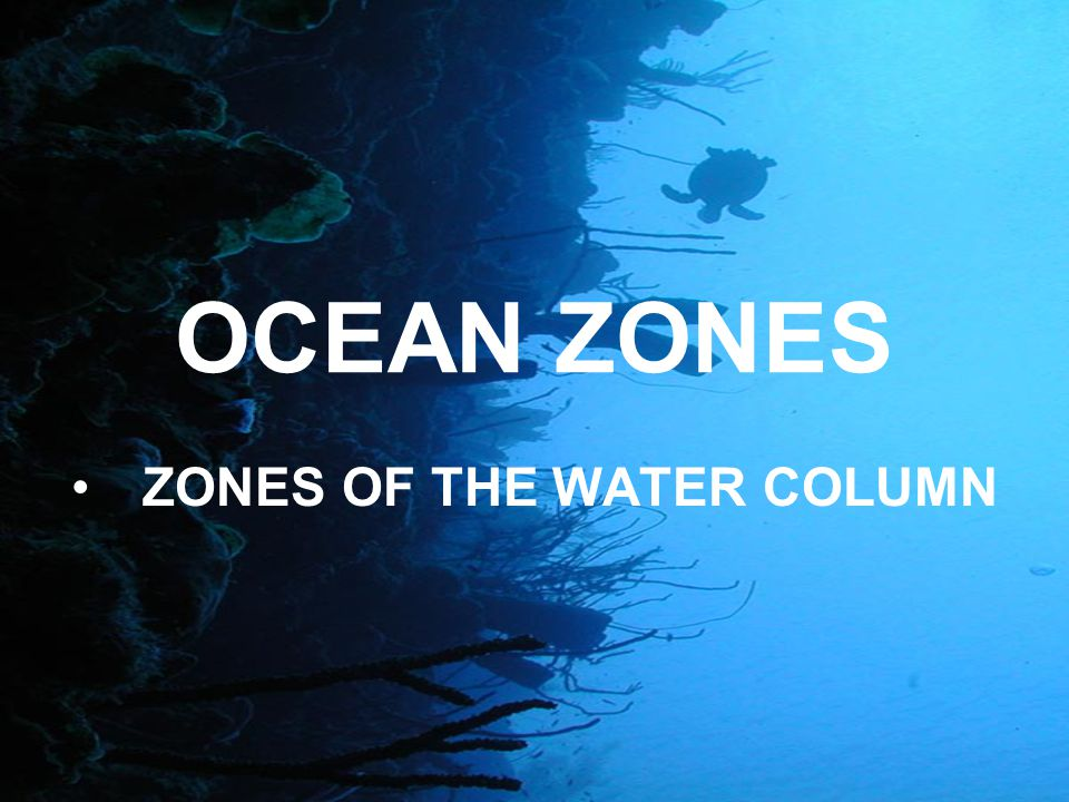 OCEAN ZONES ZONES OF THE WATER COLUMN