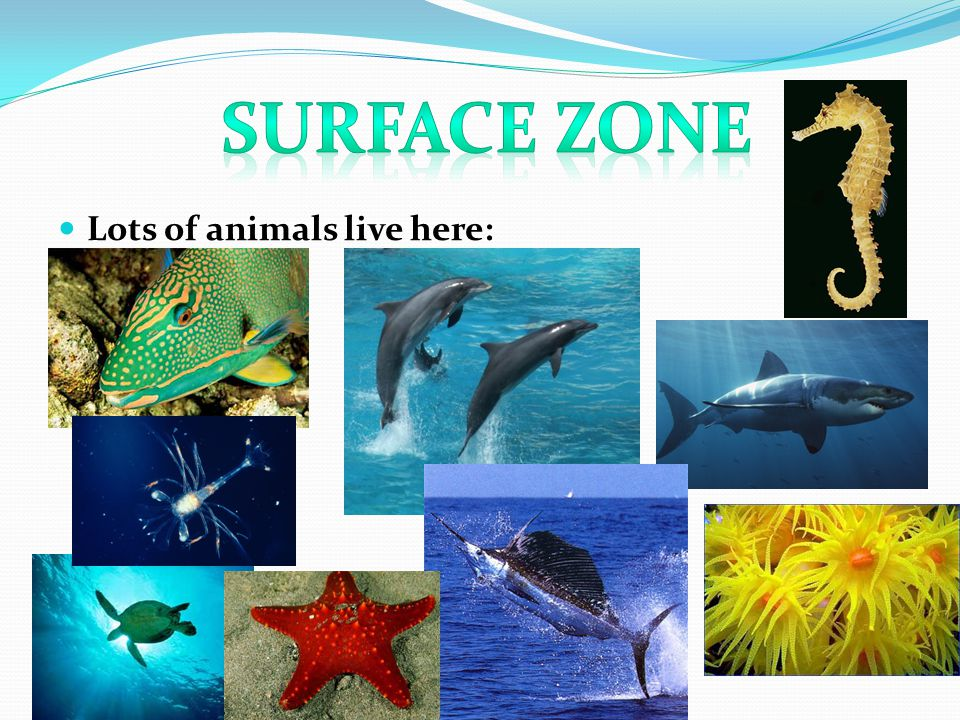 Lots of animals live here: