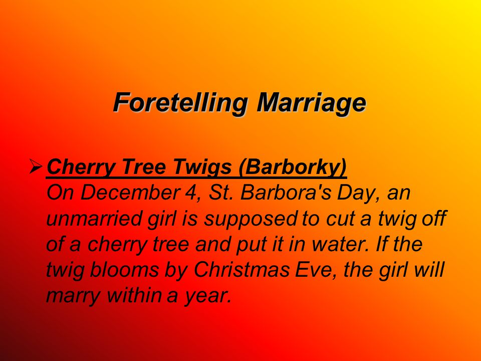 Foretelling Marriage  Cherry Tree Twigs (Barborky) On December 4, St.
