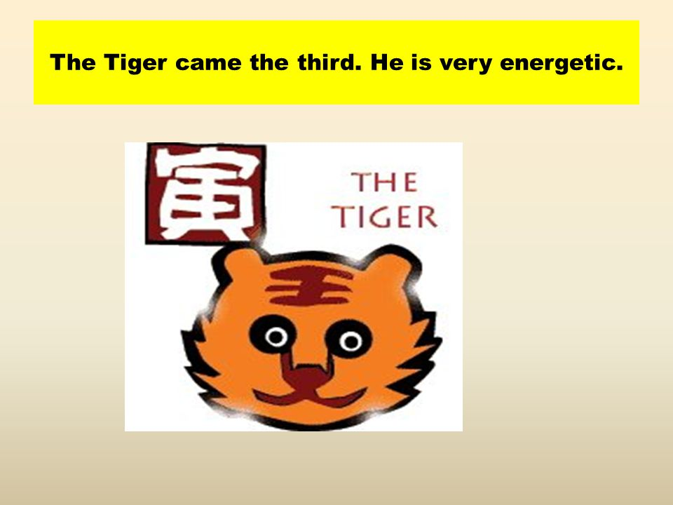 The Tiger came the third. He is very energetic.