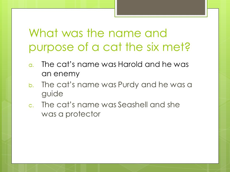 What was the name and purpose of a cat the six met.