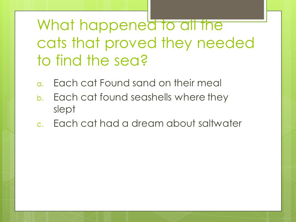 What happened to all the cats that proved they needed to find the sea.