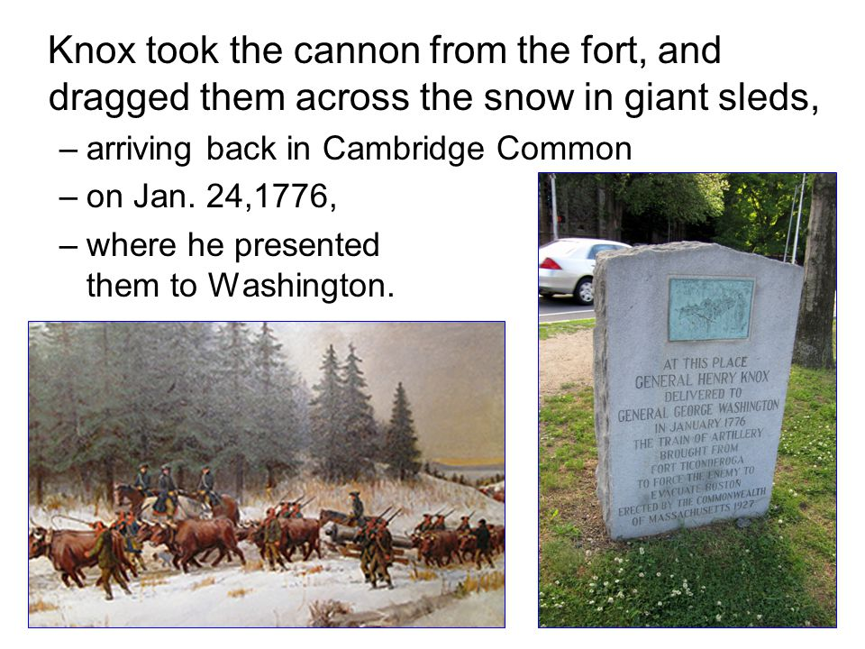 Knox took the cannon from the fort, and dragged them across the snow in giant sleds, –arriving back in Cambridge Common –on Jan. 24,1776, –where he pr