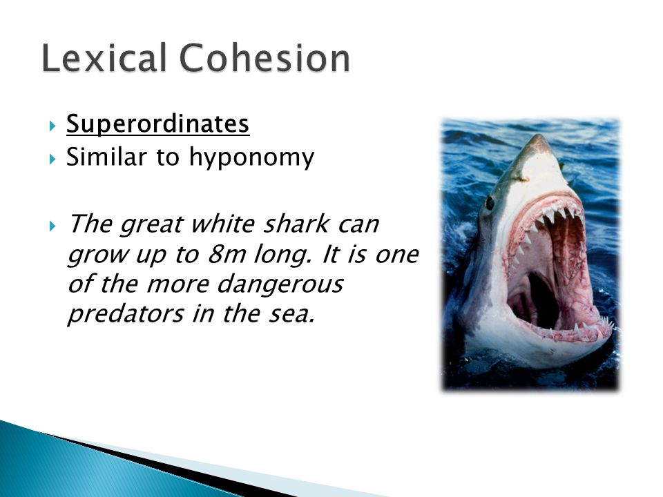 Superordinates  Similar to hyponomy  The great white shark can grow up to 8m long. It is one of the more dangerous predators in the sea.