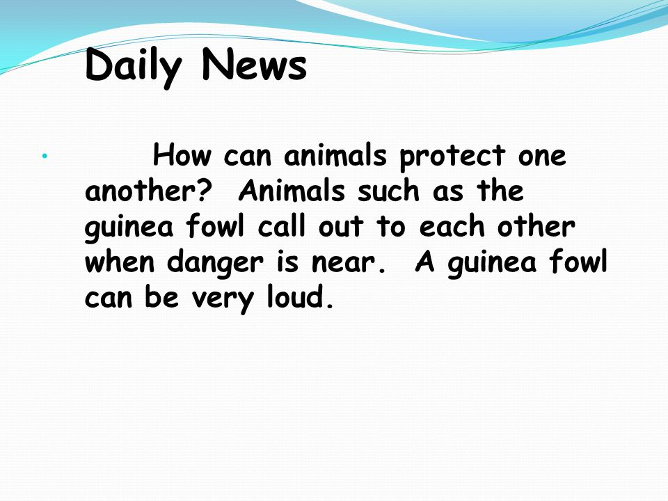 Daily News How can animals protect one another.