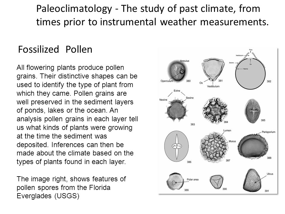Paleoclimatology - The study of past climate, from times prior to instrumental weather measurements. Fossilized Pollen All flowering plants produce po