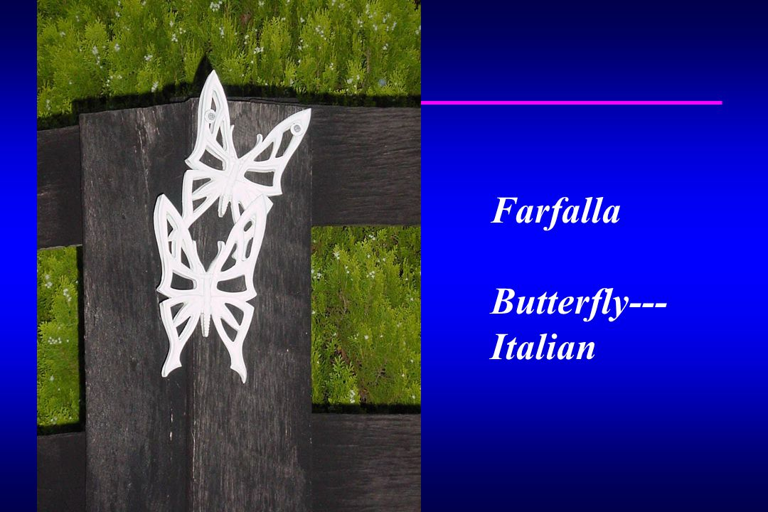 Farfalla Butterfly--- Italian