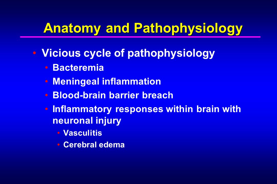Anatomy and Pathophysiology Vicious cycle of pathophysiology Bacteremia Meningeal inflammation Blood-brain barrier breach Inflammatory responses within brain with neuronal injury Vasculitis Cerebral edema