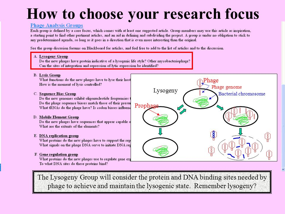 How to choose your research focus Lysogeny Phage Bacterial chromosome Phage genome Prophage The Lysogeny Group will consider the protein and DNA bindi