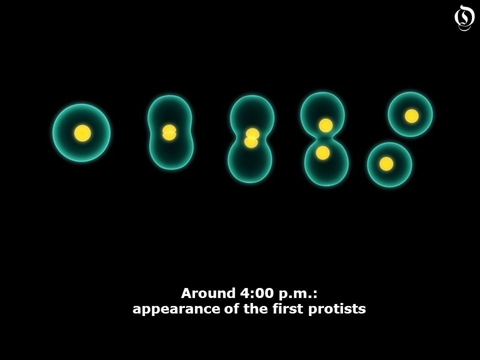 Around 4:00 p.m.: appearance of the first protists Around 4:00 p.m.: appearance of the first protists O