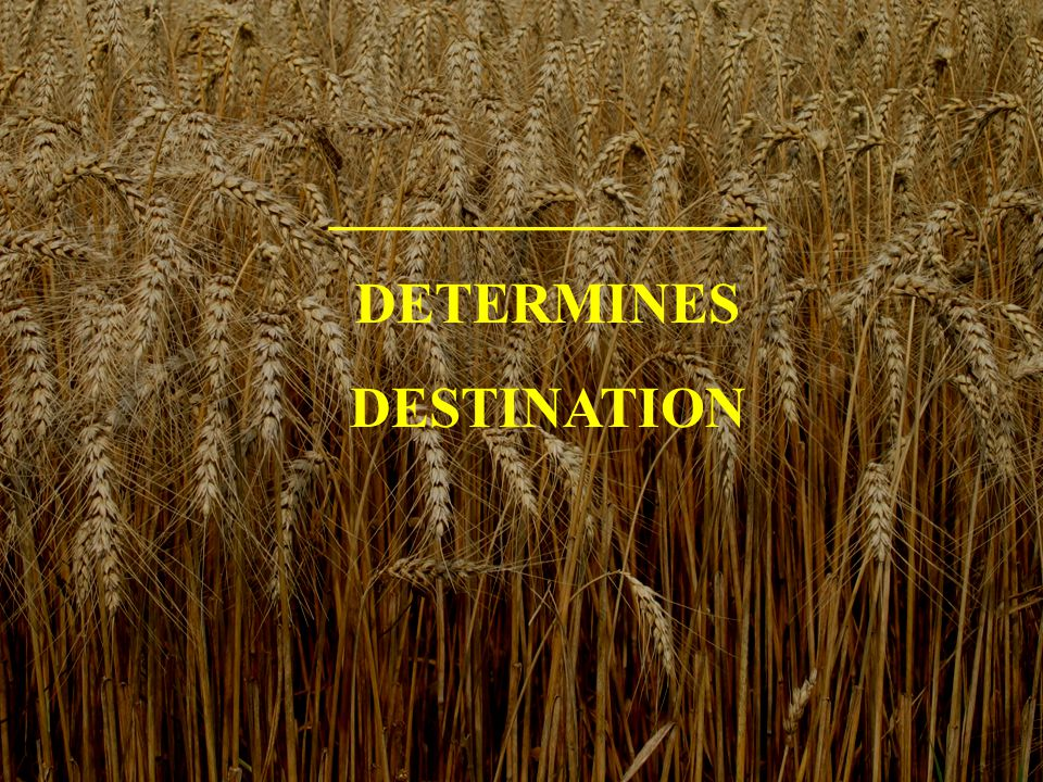 _______________ DETERMINES DESTINATION