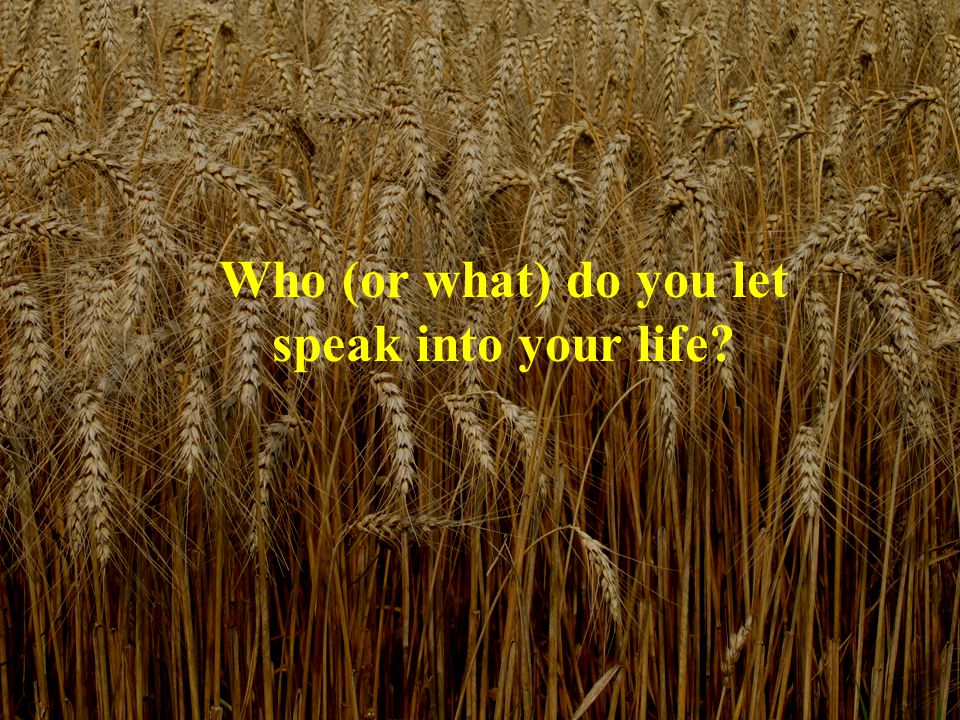 Who (or what) do you let speak into your life?