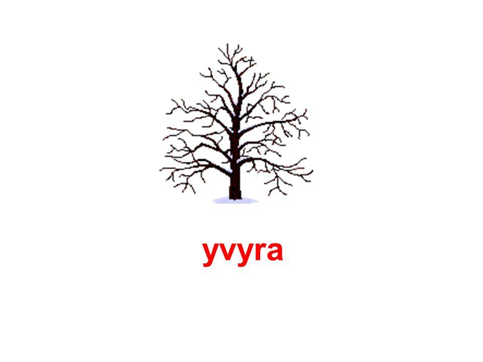 yvyra