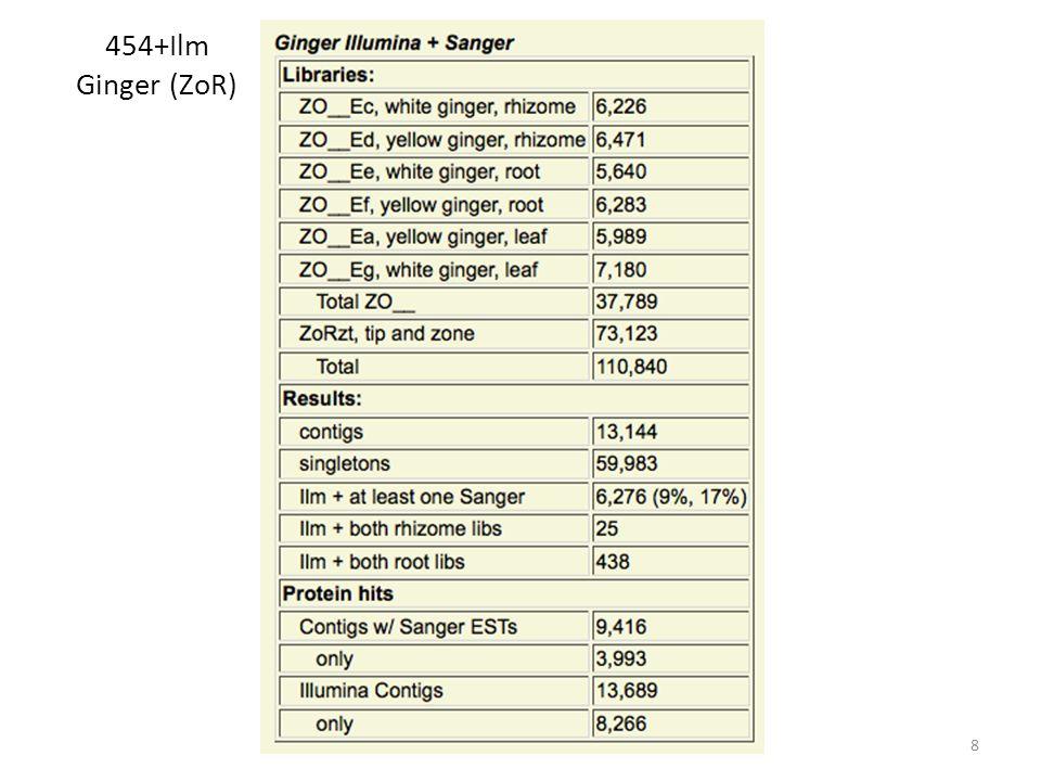 454+Ilm Ginger (ZoR) 8