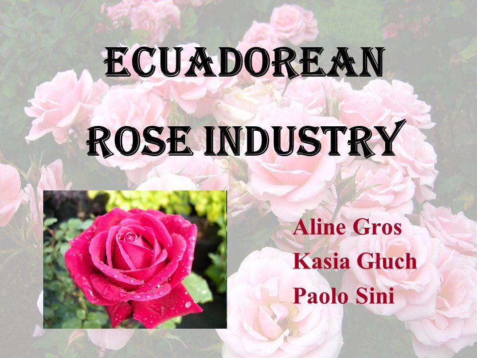 Aline Gros Kasia Głuch Paolo Sini Ecuadorean Rose Industry