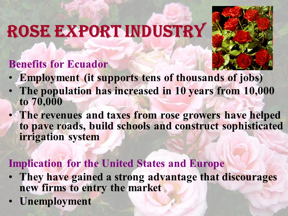 Rose export industry Benefits for Ecuador Employment (it supports tens of thousands of jobs) The population has increased in 10 years from 10,000 to 70,000 The revenues and taxes from rose growers have helped to pave roads, build schools and construct sophisticated irrigation system Implication for the United States and Europe They have gained a strong advantage that discourages new firms to entry the market Unemployment