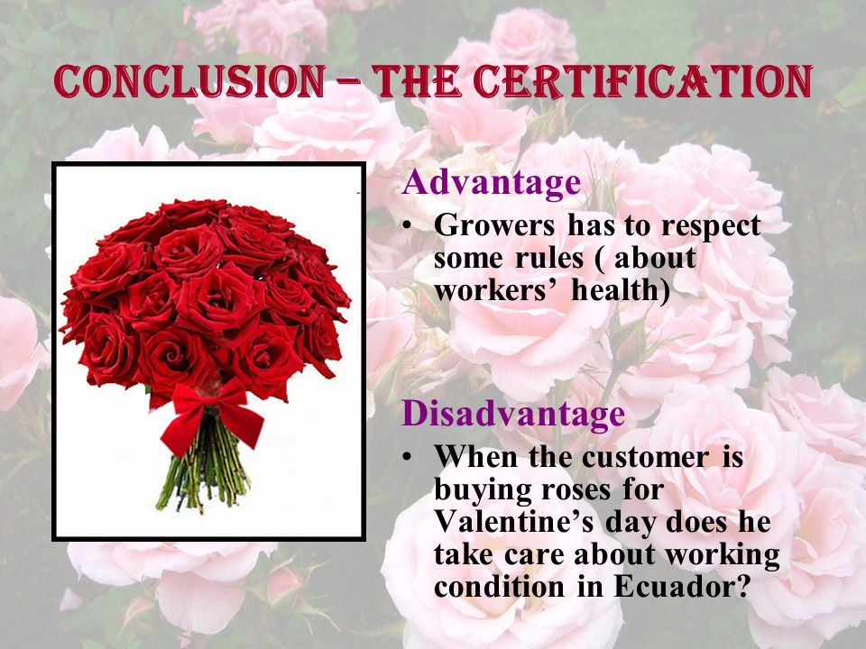 Conclusion – the certification Advantage Growers has to respect some rules ( about workers' health) Disadvantage When the customer is buying roses for Valentine's day does he take care about working condition in Ecuador?