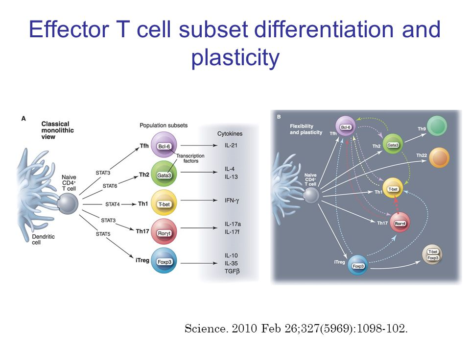 Effector T cell subset differentiation and plasticity Science. 2010 Feb 26;327(5969):1098-102.