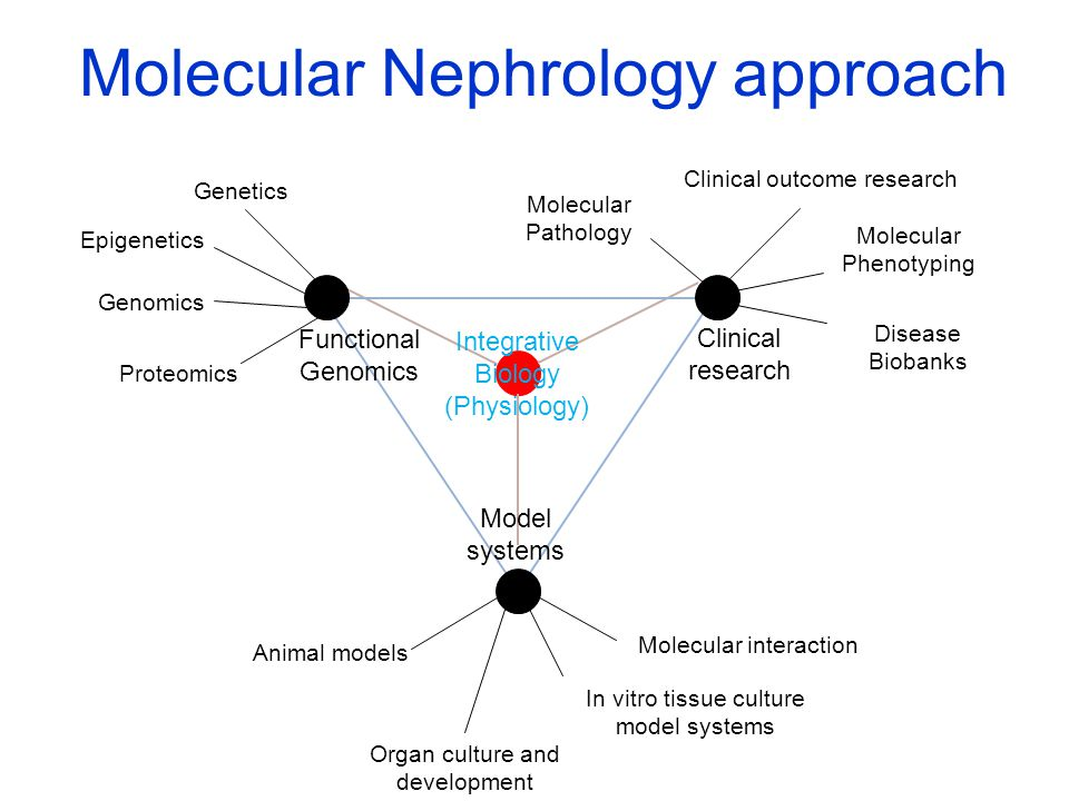 Integrative Biology (Physiology) Molecular Nephrology approach Genetics Epigenetics Genomics Proteomics In vitro tissue culture model systems Organ culture and development Molecular interaction Animal models Clinical outcome research Molecular Phenotyping Disease Biobanks Functional Genomics Clinical research Model systems Molecular Pathology