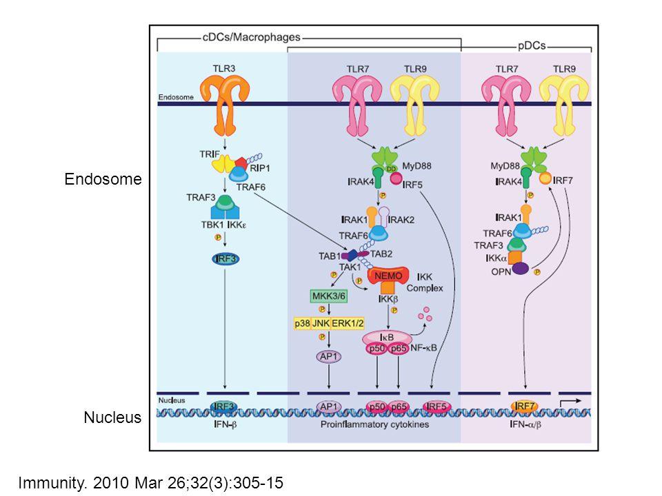 Immunity. 2010 Mar 26;32(3):305-15 Endosome Nucleus