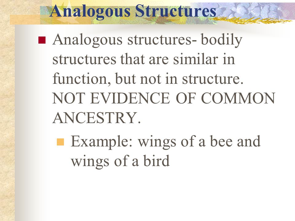Analogous Structures Analogous structures- bodily structures that are similar in function, but not in structure. NOT EVIDENCE OF COMMON ANCESTRY. Exam