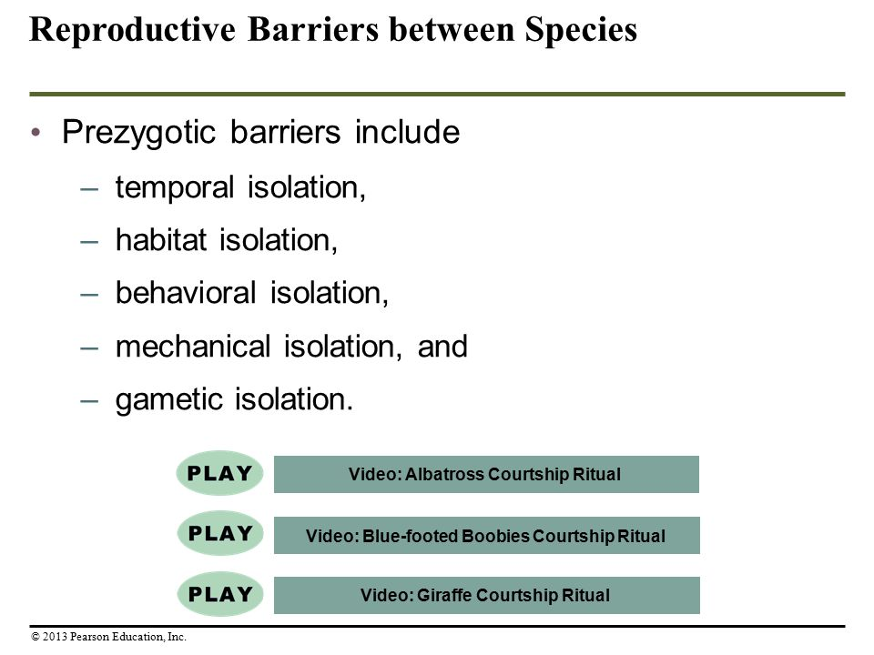 Prezygotic barriers include –temporal isolation, –habitat isolation, –behavioral isolation, –mechanical isolation, and –gametic isolation. Reproductiv