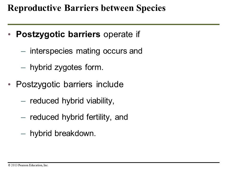 Postzygotic barriers operate if –interspecies mating occurs and –hybrid zygotes form. Postzygotic barriers include –reduced hybrid viability, –reduced