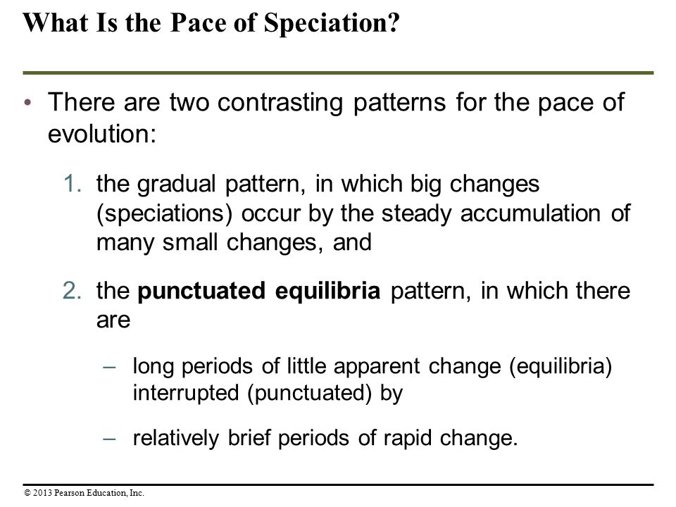 What Is the Pace of Speciation? There are two contrasting patterns for the pace of evolution: 1.the gradual pattern, in which big changes (speciations