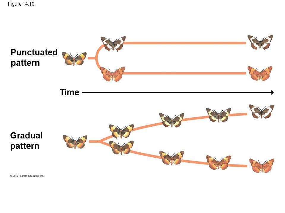 Figure 14.10 Punctuated pattern Gradual pattern Time