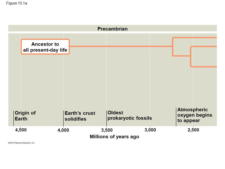 Figure 15.1a Precambrian Ancestor to all present-day life Origin of Earth Earth's crust solidifies Oldest prokaryotic fossils Atmospheric oxygen begin