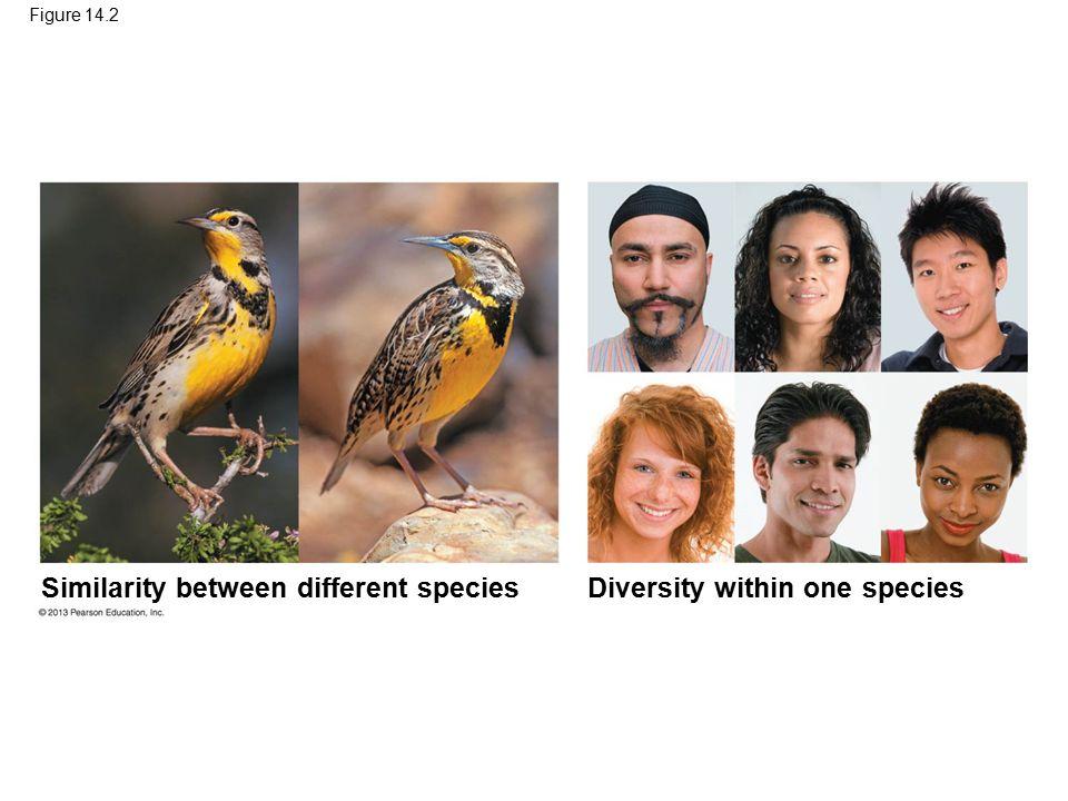 Figure 14.2 Diversity within one species Similarity between different species