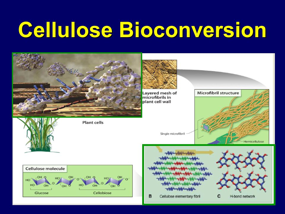 Cellulose Bioconversion
