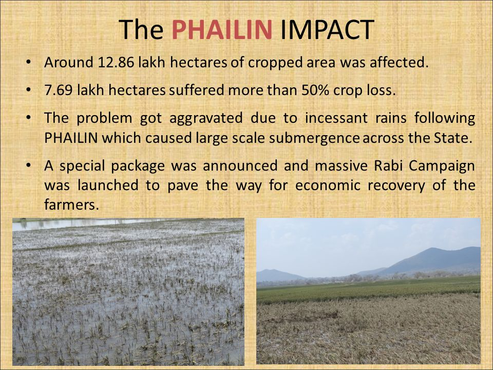 The PHAILIN IMPACT Around 12.86 lakh hectares of cropped area was affected. 7.69 lakh hectares suffered more than 50% crop loss. The problem got aggra