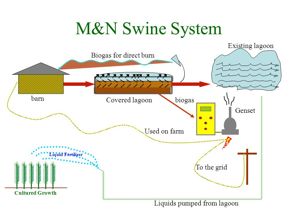 IC Engine Liquid Fertilizer Cultured Growth Biogas for direct burn Covered lagoon Existing lagoon Liquids pumped from lagoon Genset To the grid Used on farm barn biogas M&N Swine System